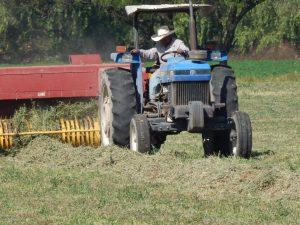 Sedea apoyó a productores agrícolas por sequía 1